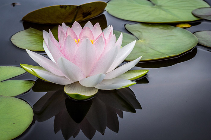 Integrative-Yoga-Homepage-Lotus